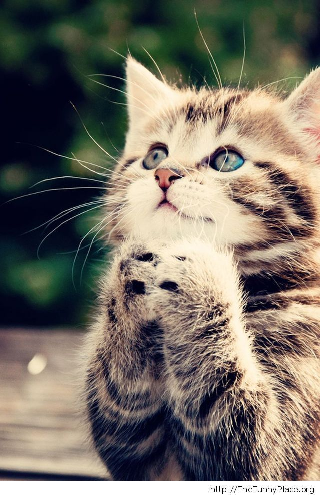 Kitty Thank you God Tagged cute kitty funny cat