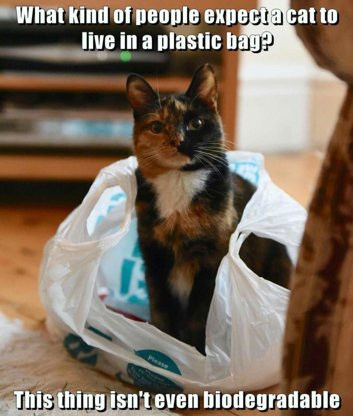 Medium Size of Thanksgiving Lolcats Plastic Bag Lol At Funny Cat Memes Thanksgiving Splendi