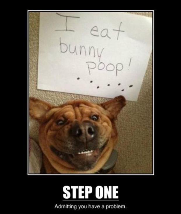 demotivational posters dumpaday 10 Cat Shaming Funny Dog Shaming Dog Shaming