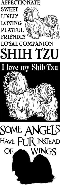 SHIRTS & GIFTS FOR THE DOG LOVER THESE SHIH TZU DESIGNS ARE AVAILABLE IN