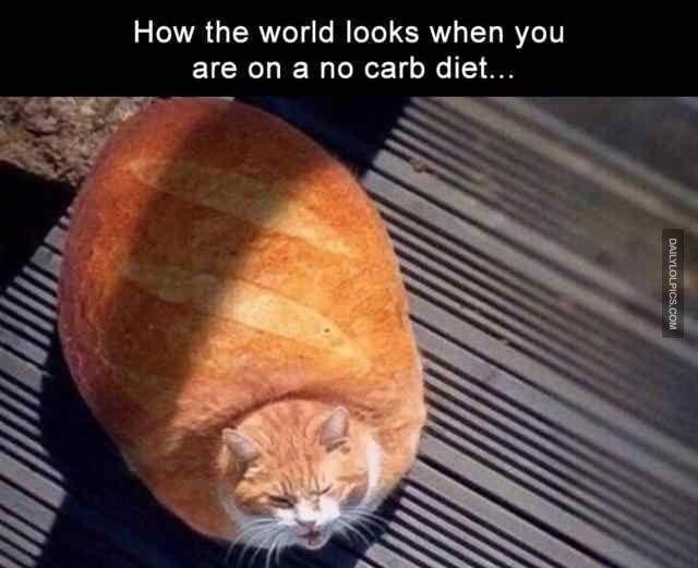 Cat Whiskers Feral cat Cat food æ©˜åçŒ Dog Tiger