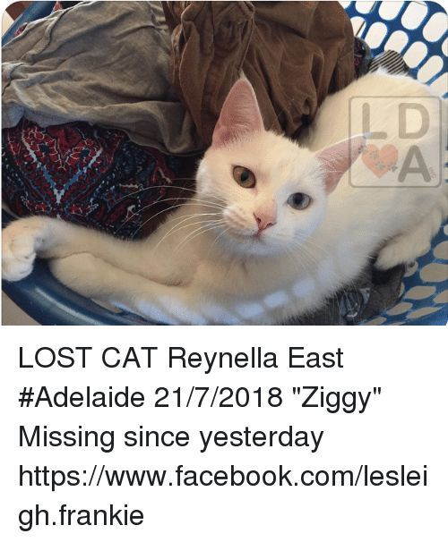 Memes and Lost LOST CAT Reynella East Adelaide 21 7