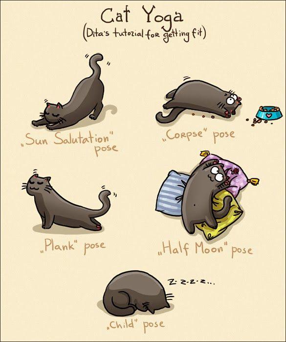 Black Cat Yoga Poses Funny