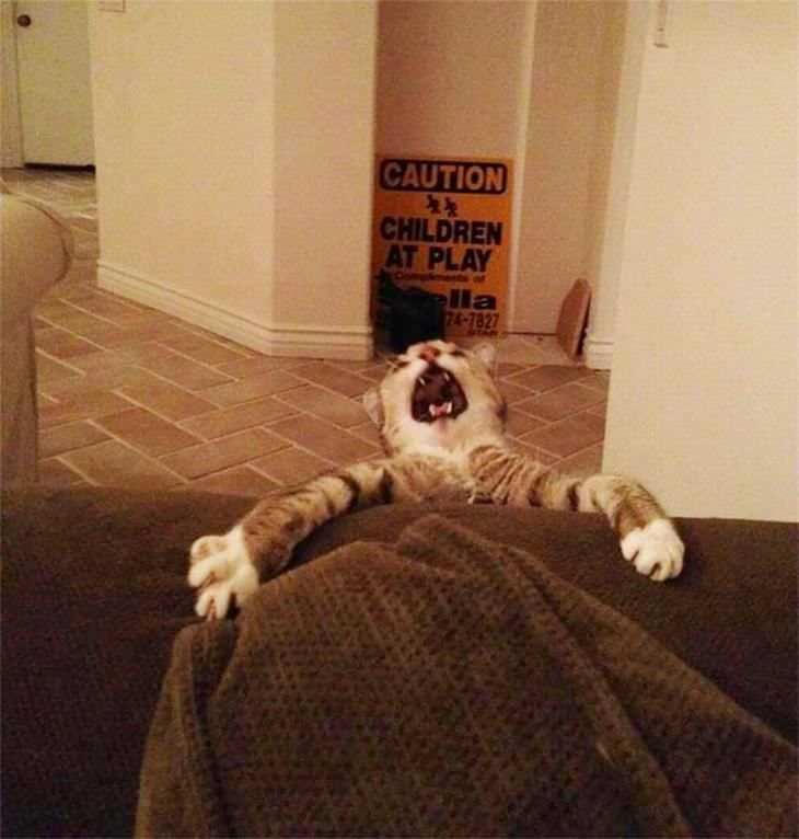 Hilarious Cat Expressions