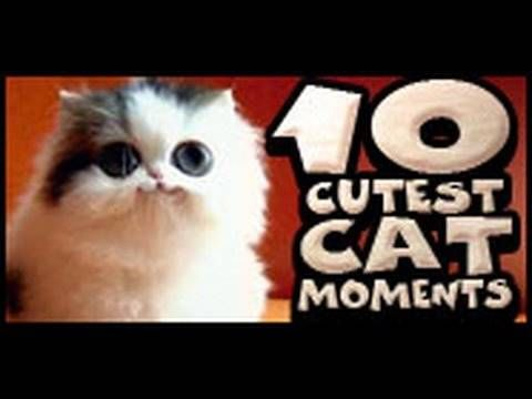 10 Cutest Cat Moments The clips for this pilation of cute cat bloopers etc
