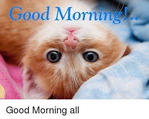 Go Od Morning Good Morning Allgood Morning Meme Funny