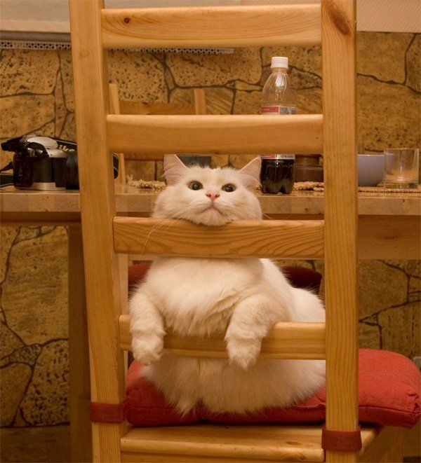 Cat Relaxation 50 Funny Cat 3 3
