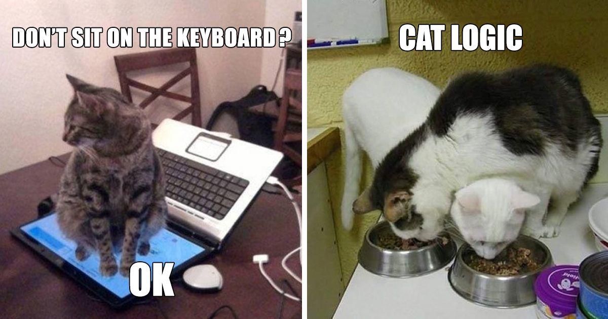 Refined Funny Black Cat Memes