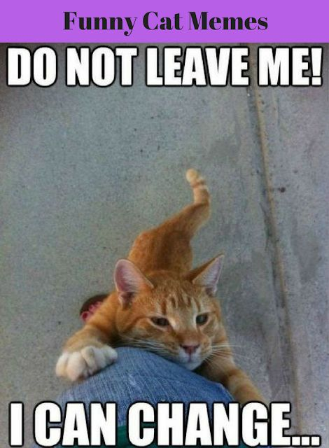 Funny Cat Memes That Will Make You Laugh Out Loud