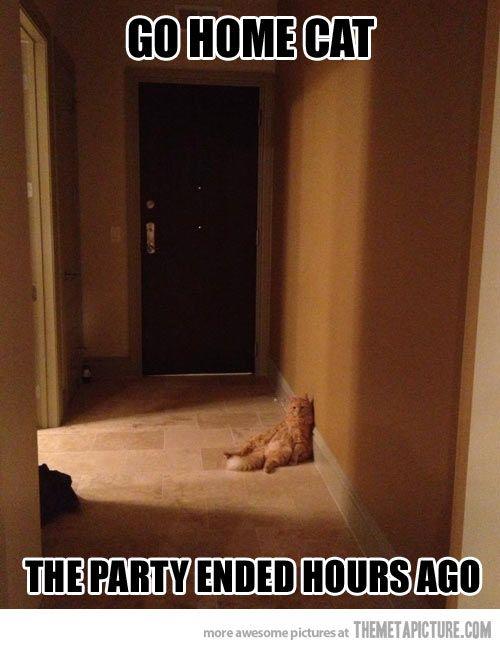 Go home cat…