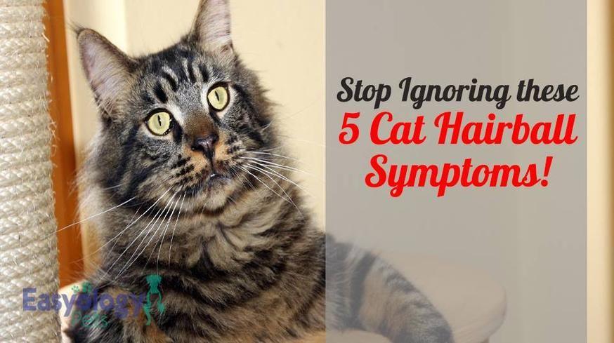 cat hairball symptoms 875x
