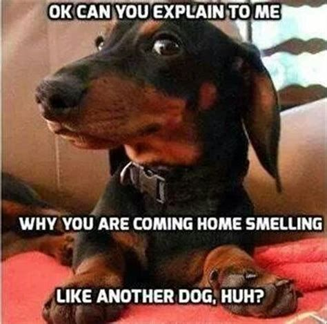 Grab Hold Of the Beautiful Funny Dog Pictures Thanks