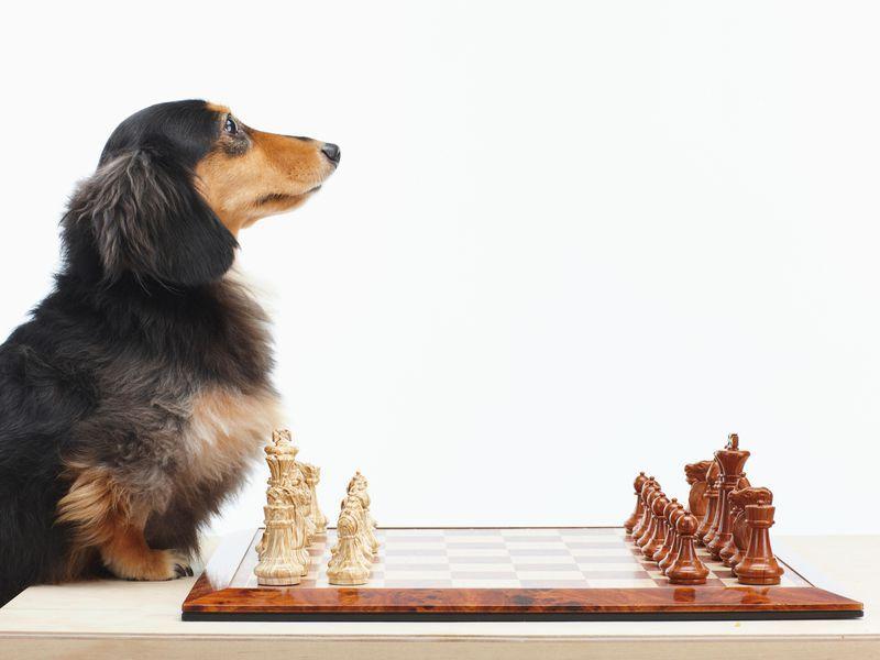 11 10 2014 chess2
