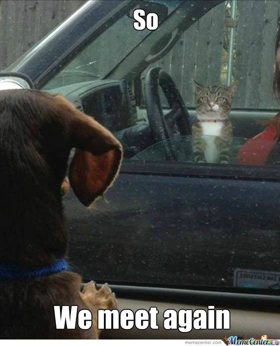 Funny meme of a dog and cat that meet up at the lights when their owners