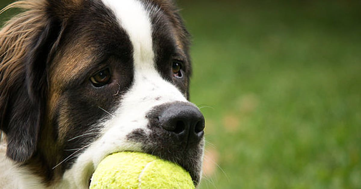 17 Diy Dog Toys How To Make Fun Safe Toys From Things In Your House Care