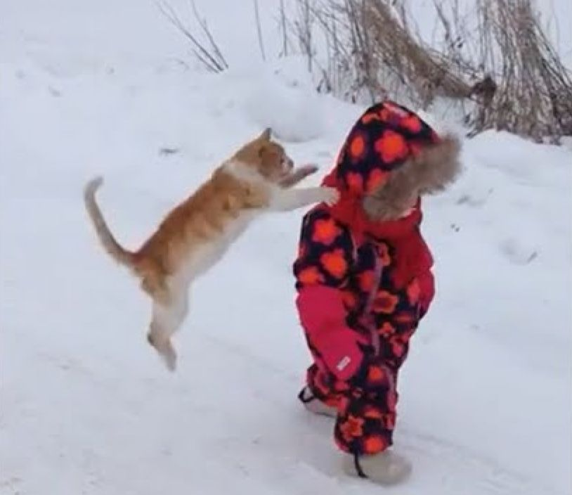 Small Children A Funny GIF Collection