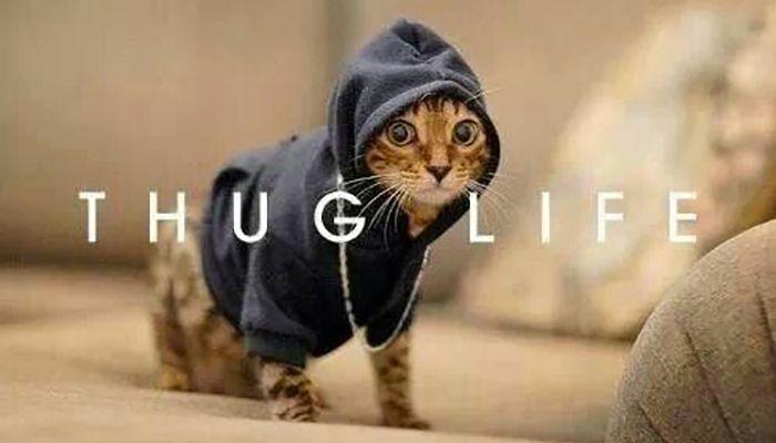 Top 26 thug life cat Memes