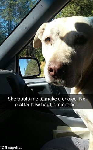Grab Hold Of the Best Of Cute Dog Pictures with Funny Captions