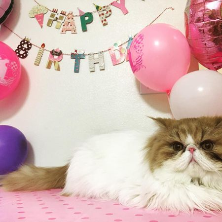 Grab Hold Of the Best Of Funny Animal Pictures Birthday Cute Nice