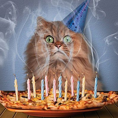 Cat Birthday Card Pizza Cake Funny Cat Party Hat & Candles Greeting Card NEW in Home Furniture & DIY Celebrations & Occasions Cards & Stationery