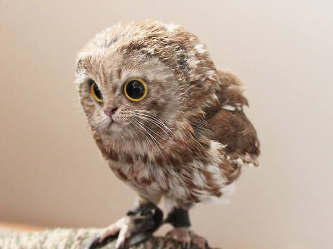 1 This one is fitting because Owls are just the cats of birds