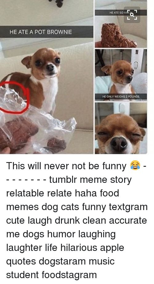 Grab Hold Of the Best Of Funny Clean Dog and Cat Memes