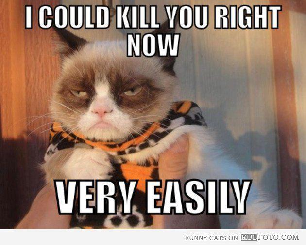 fc95f02c9bdf55f e6acbc85d1e0–grumpy cat meme grumpy kitty