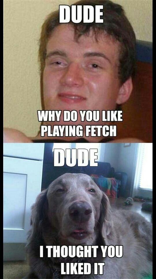 high dog meme