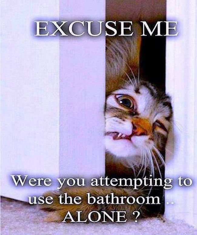 funny cat bathroom meme pics photos