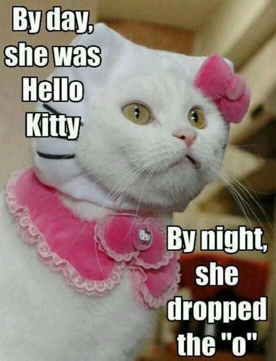 """by night she dropped the """"o"""" Funny Animal Funny AnimalsFunniest"""