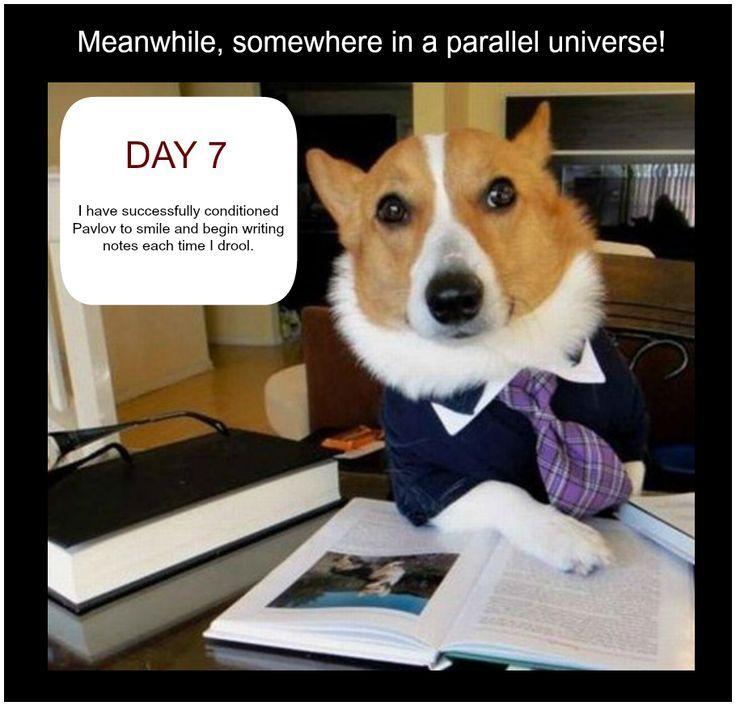 You Cant Beat A Good Old Pavlovs Dog Joke