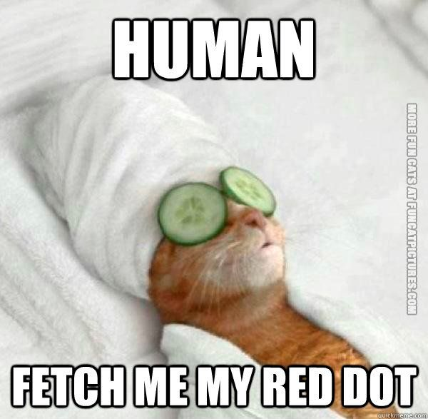 funny cats human fetch me my red dot