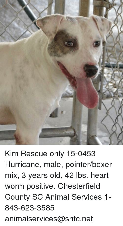 Memes Boxer and Hurricane Kim Rescue only 15 0453 Hurricane male