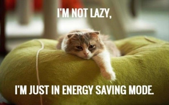 Top 30 Funny cat Picture Quotes very funny