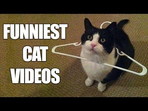 Funny Cats pilation [MUST SEE] Funny Cat Videos 2016
