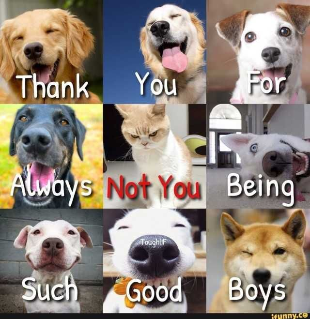 Thank you for always being such good boys doggies Not you cat