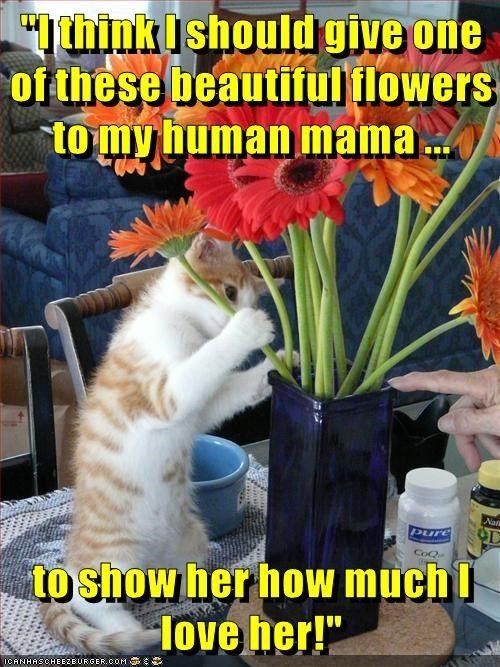 animals cat Flower love caption beautiful mama mothers day