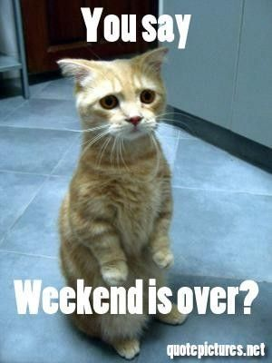 weekend is over funny cute weekend funny quotes days of the week humor sunday