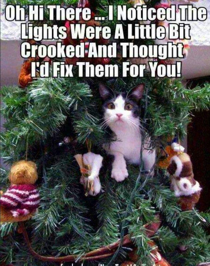 Cat in christmas tree meme 700x889