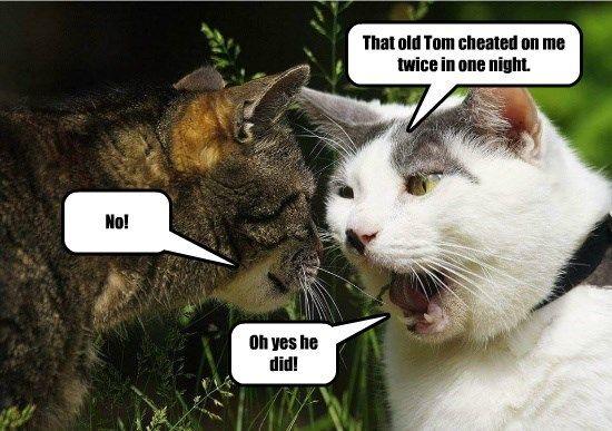 cat twice tom caption cheated