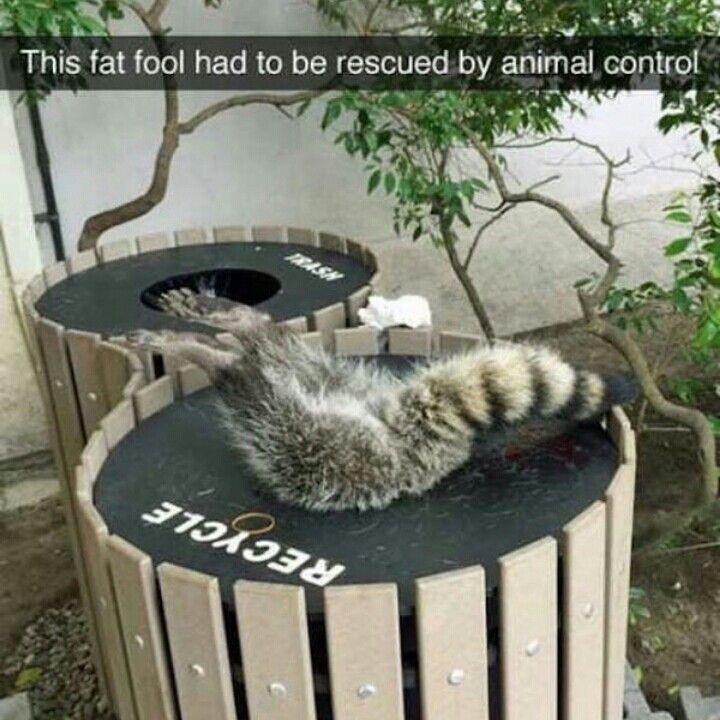 Clean Animal Memes Funny Animal Memes Cute Funny Animals
