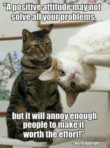 These 20 Cat Memes Will Make Your Monday So Much Better
