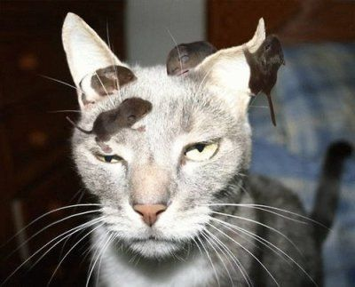 Grab Hold Of the Fresh Funny Cat and Mouse Pictures