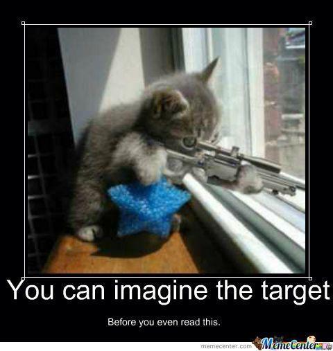 Cat with Gun Meme