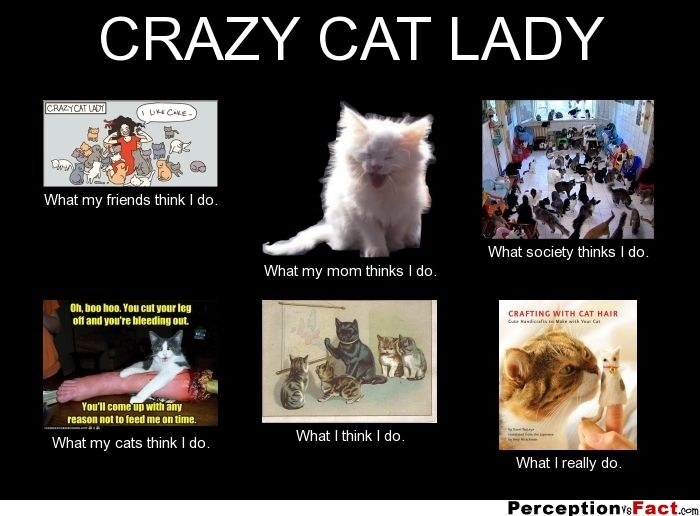 Funny Cat Lady Friends Picsbud