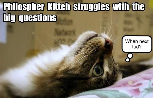 Cats funny philosophy noms