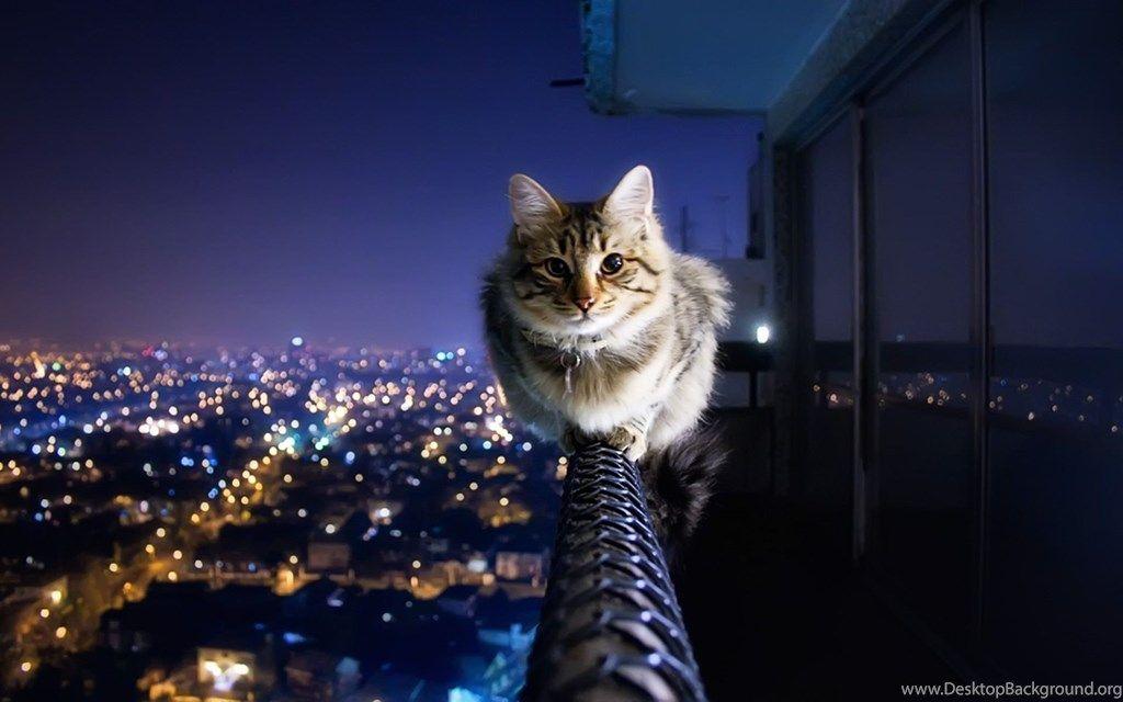 cool cat wallpaper 73 cute cat wallpapers h