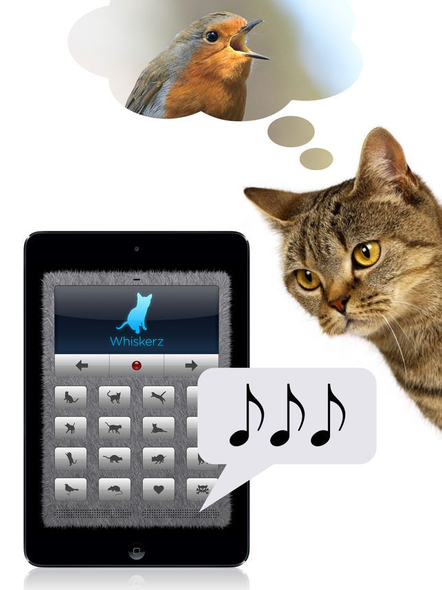 Human to Cat Translator on the App Store