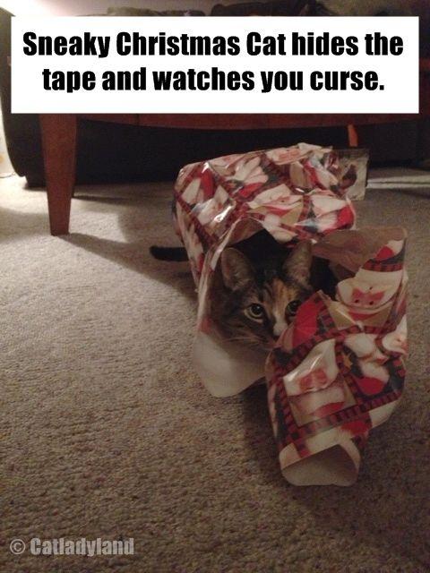 Sneaky Christmas Cat