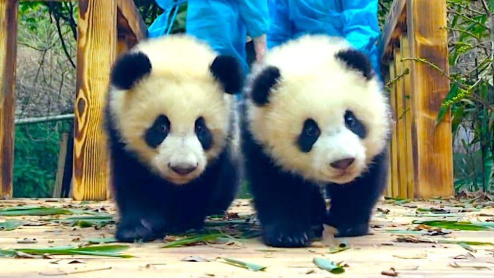Review Pandas